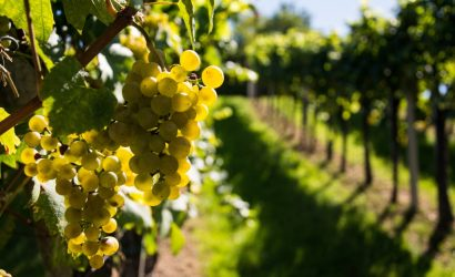 Wine and vineyard tour Languedoc France