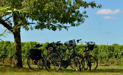 Tour bikes in the Saint Emilion vineyards